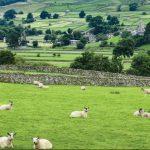 Hill Sheep Health North