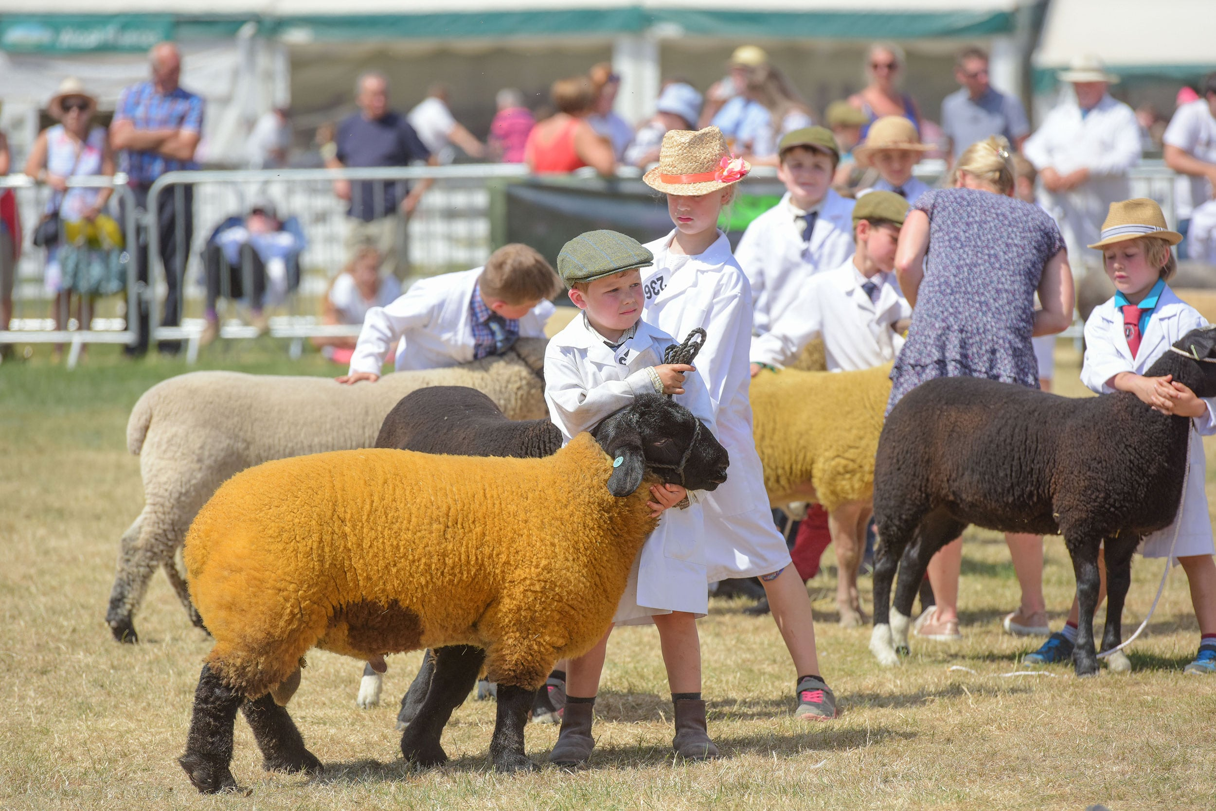 Primary School visits to the Great Yorkshire Show