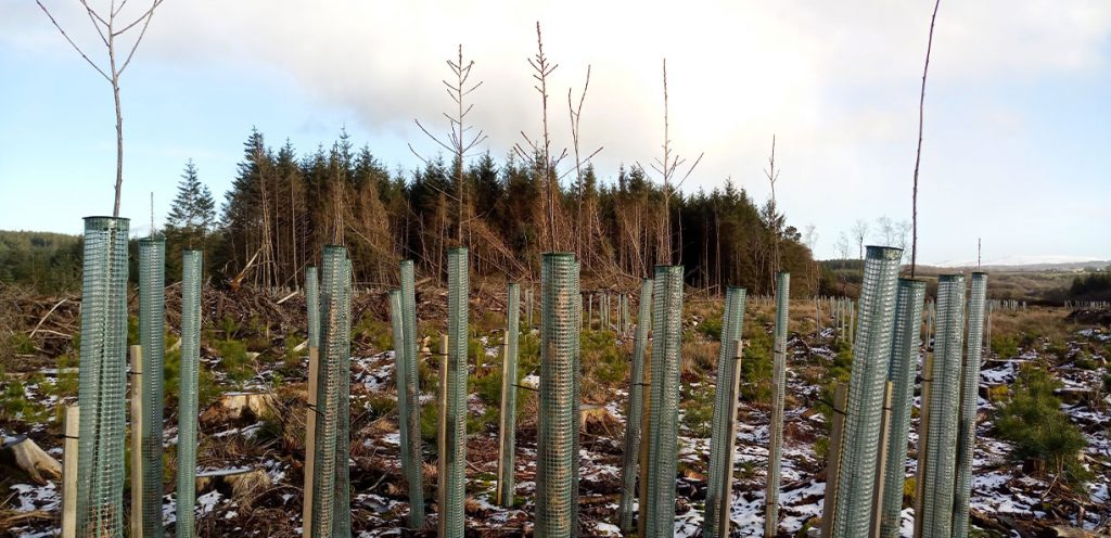 New scheme to boost tree planting