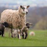 Future Farmers Autumn Debate blog