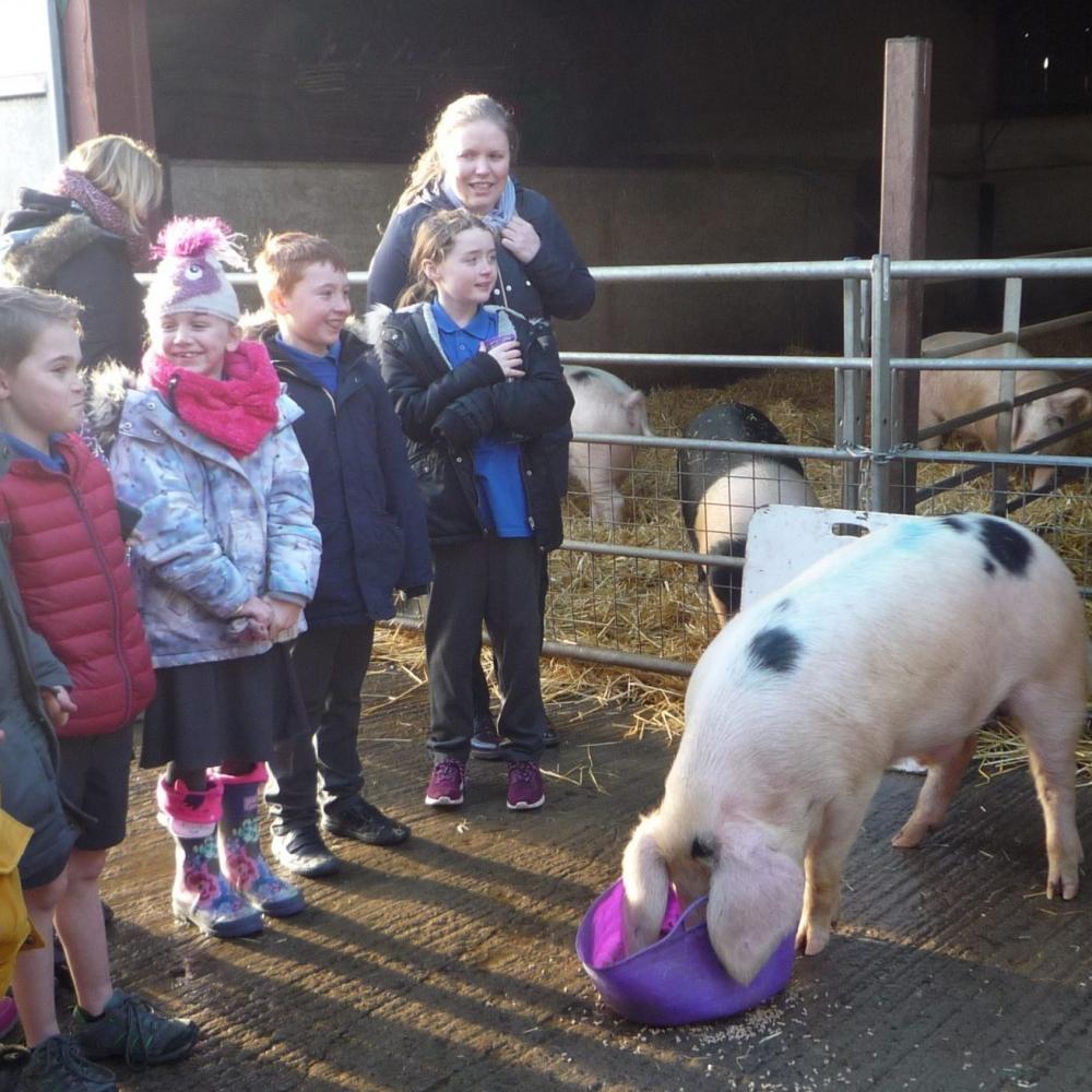 Birchfield Farm Visit
